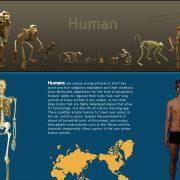 eskeletons
